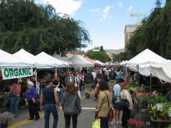 hollywood-farmers-market-1